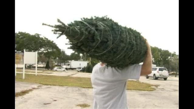 Let Your Natural Christmas Tree be Put to Good Use