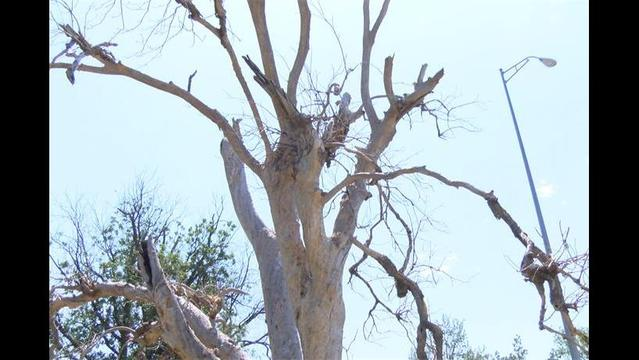 W.F. Stage 4 Drought Restrictions to Impact Trees