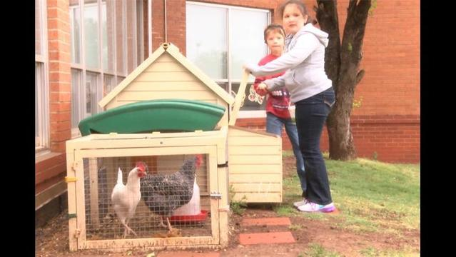 Cunningham Deaf Education Class Manages Chicken Coop