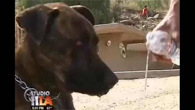 Hiker and Dog Save Man Trapped for Days in Hole