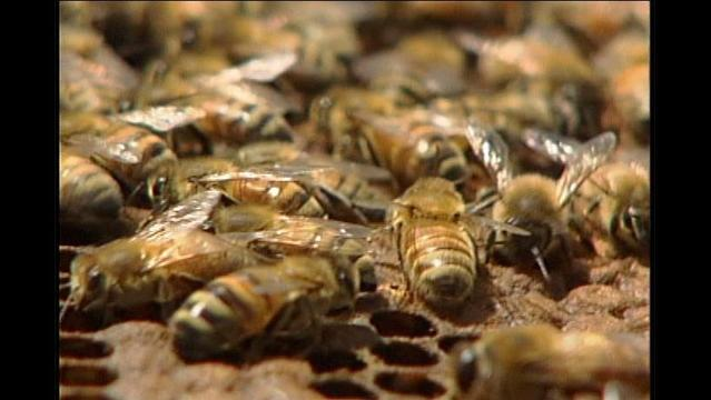 UPDATED: Swarm of Bees Causes Evacuation off Windthorst Road
