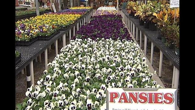 Local Nursery Holding Final Sale This Weekend