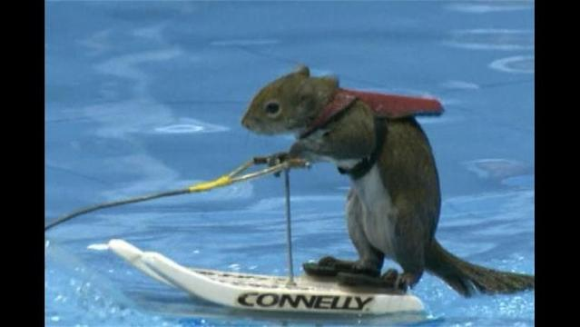 Twiggy: The Skiing Squirrel on a Mission