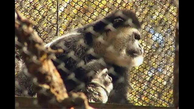 Dallas Zoo Introduces New Babies