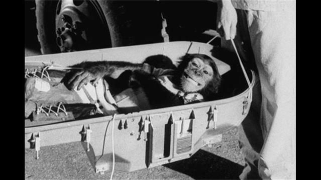 Iran Claims to Have Successfully Sent Monkey into Space