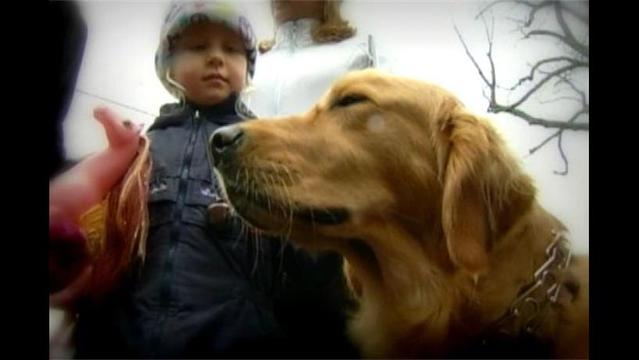 Chicago Group Brings Therapy Dogs to Newtown
