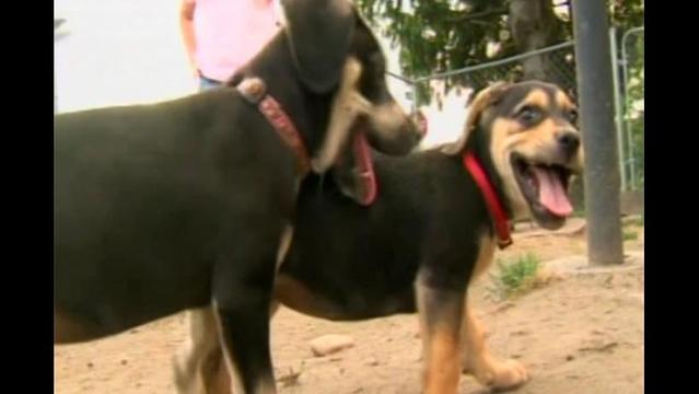 Puppies in Pennsylvania Repeatedly Thrown over Bridge