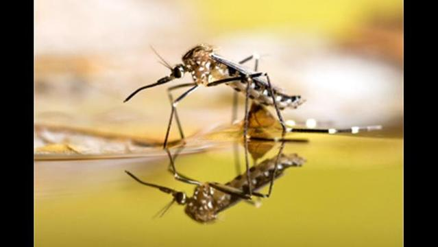 W.C. Residents Helping Keep Mosquito Numbers Down