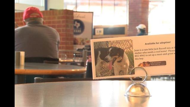 Humane Society Teams Up with Local Businesses to Promote Pet Adoptions