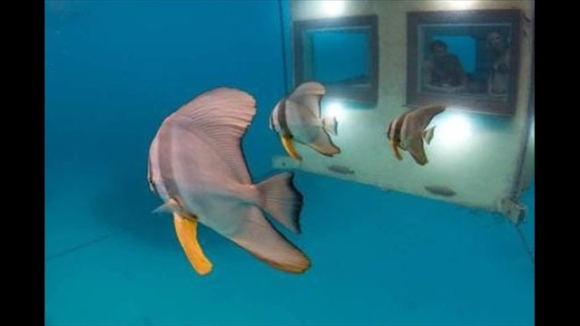 The Underwater Room Lets Guests Sleep with the Fish