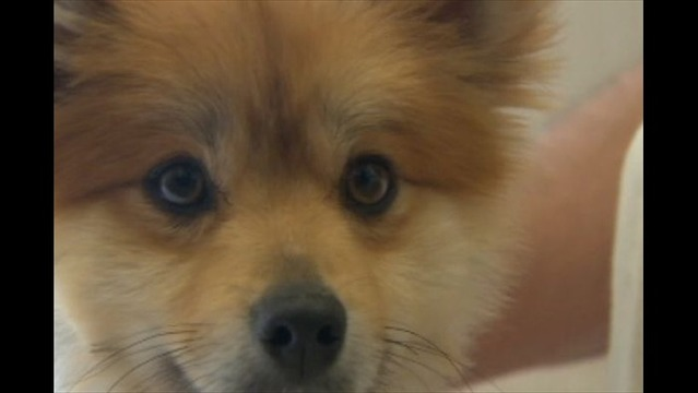 FDA Says Toxic Jerky Treats May be Cause of over 1,000 Dog Deaths
