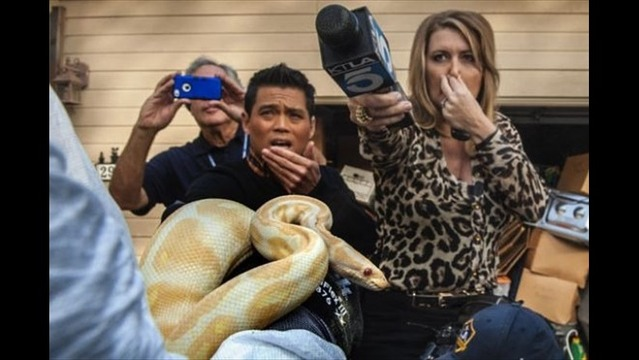 Hundreds of Snakes Found in California House