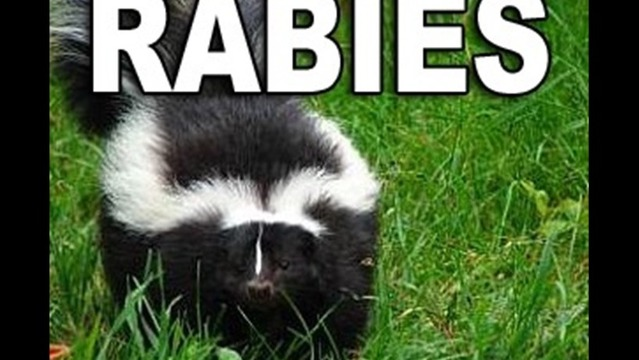 Skunk Found Near a Wichita Falls Apartment Complex Tests Positive for Rabies