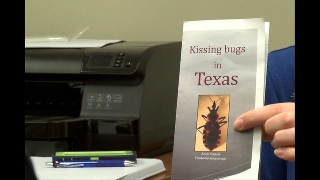 The Deadly Kissing Bug Makes its Way Around Texas