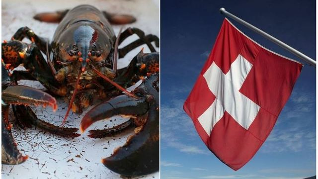 Swiss government rules lobsters must be 'stunned' before being boiled